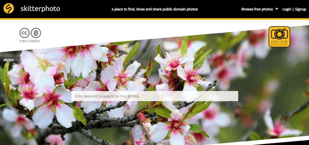 Stock Images for Websites-Skitterphoto