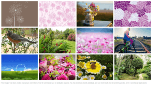 Stock Images for Websites-Pickup Images